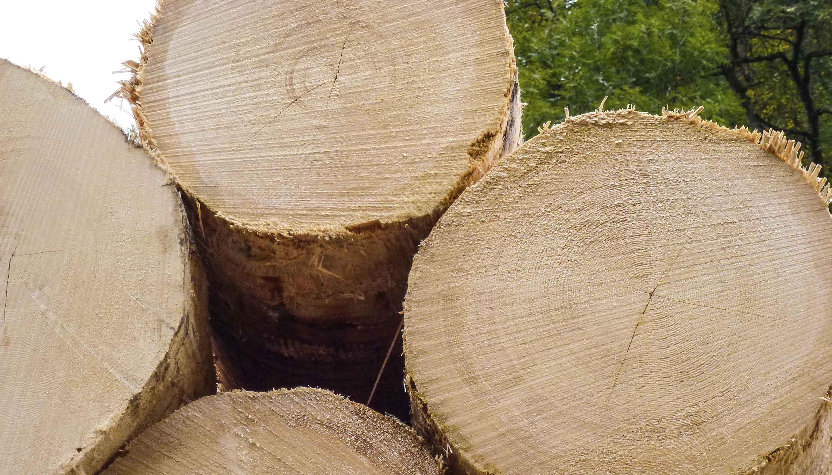 Holzmarkt