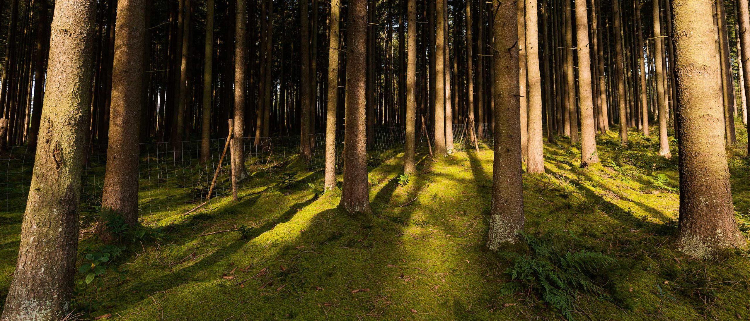 FBG Memmingen Waldpflege