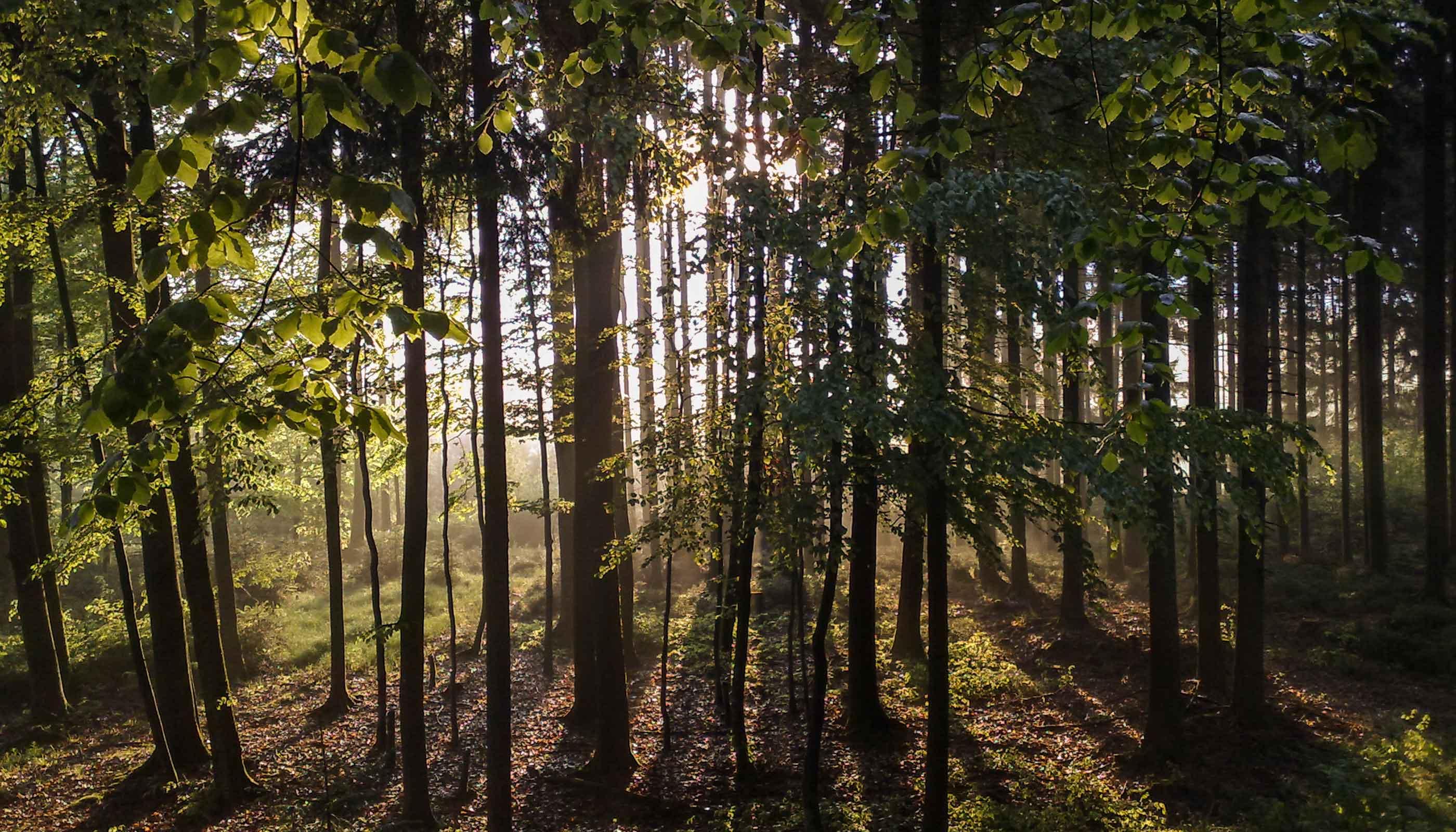 Waldwarte der FBG Memmingen